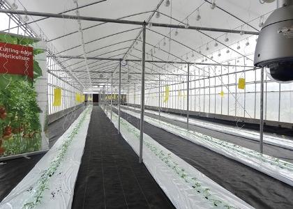 """Mô hình """"Nhà máy rau"""" áp dụng phương thức trồng trọt hoàn toàn khép kín, giúp nâng cao năng suất chất lượng nông sản"""
