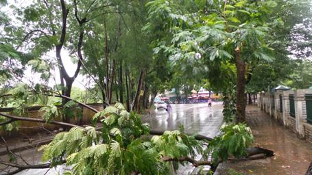Không có giông lốc lớn nhưng cây trên một tuyến số tuyến phố vẫn bị đổ gãy. Ảnh Dân Trí