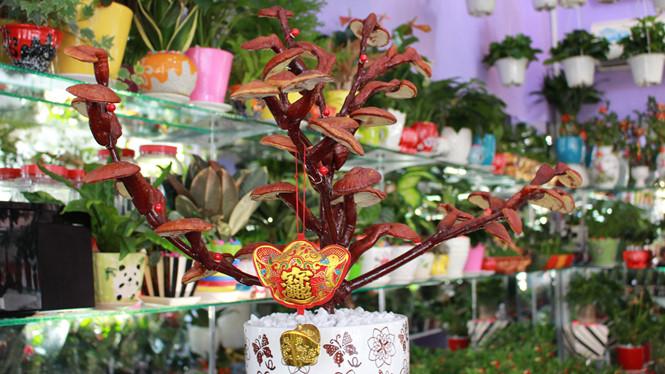 Giá nấm linh chi bonsai có thể lên tới cả chục triệu đồng nhưng luôn trong tình trạng hết hàng