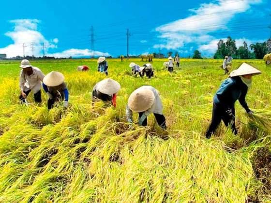 đồng bằng sông cửu long nâng cao chất lượng gạo