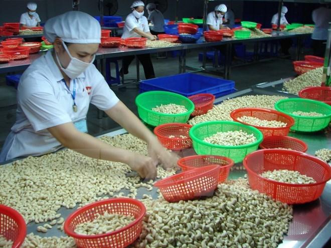 Nhiệm vụ số một của ngành điều hiện nay là tăng năng suất để giảm bớt phụ thuộc vào nguyên liệu nhập khẩu
