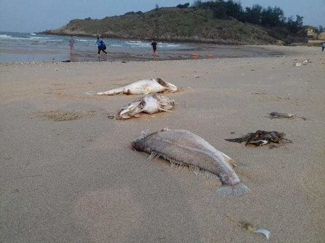 Nghi vấn tàu nước ngoài thả độc vụ cá chết hàng loạt ở miền Trung