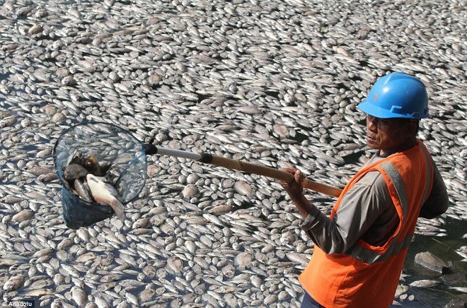 Cấm kinh doanh cá chết bất thường dọc ven biển từ Hà Tĩnh đến Thừa Thiên – Huế