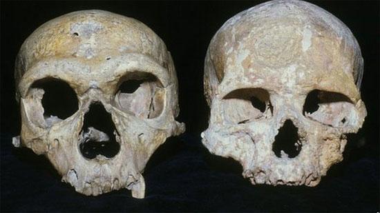 Hộp sọ của người nguyên thủy Neanderthal (trái) và hộp sọ của người hiện đại (phải) - tổ tiên của chúng ta