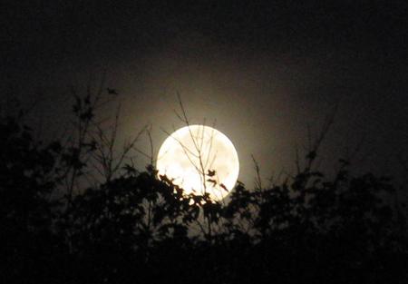 Muỗi đốt nhiều vào đêm trăng tròn