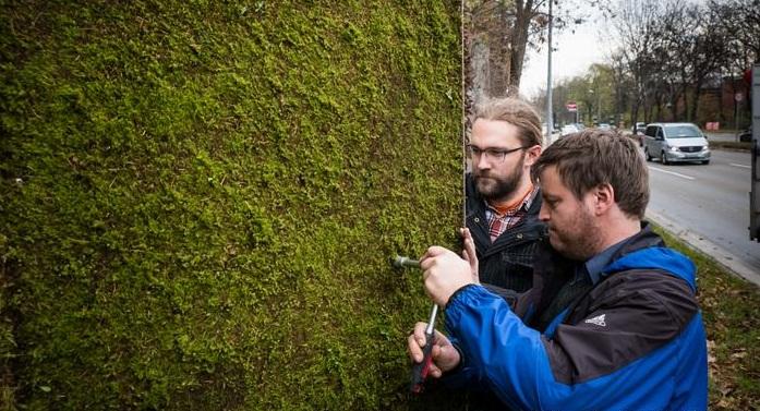 Bức tường rêu được trồng với mục đích lọc và phân hủy bụi trong không khí.