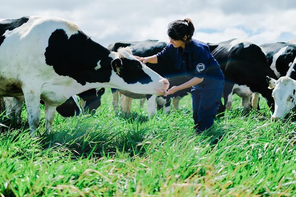 Cánh đồng cỏ xanh mướt bạt ngàn của trang trại bò sữa Vinamilk Organic