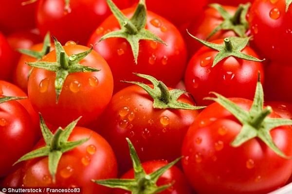 Cà chua ngon nhất khi bảo quản ở nhiệt độ 25 độ c.