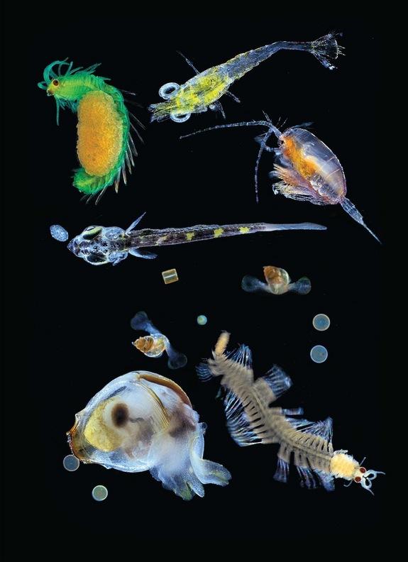 Đội nghiên cứu cũng sử dụng lưới chuyên dụng để bắt những loài sinh vật siêu nhỏ như những sinh vật phù du, động vật phù du, ấu trùng hay sinh vật đơn bào.