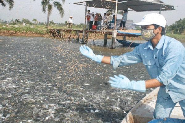 Kỹ thuật phòng bệnh cho cá nước ngọt nuôi tại ao hồ  - ảnh 1