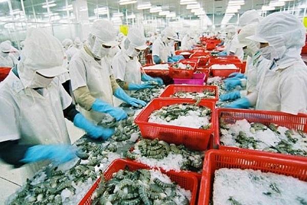 Australia kiểm tra chuỗi sản xuất tôm xuất khẩu tại Việt Nam