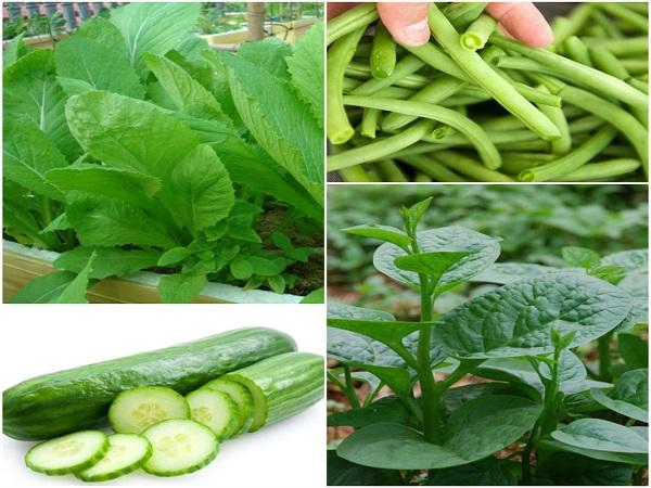 Những loại rau quả cần cẩn trọng kẻo ngộ độc khi ăn trong mùa hè