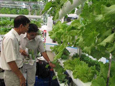 Hướng sản phẩm nông nghiệp theo tiêu chuẩn VietGAP