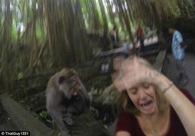 Nữ du khách bị khỉ tấn công khi cố chụp ảnh