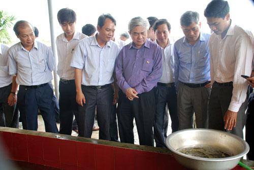 Hội đồng Khoa học tỉnh Phú Thọ vừa nghiệm thu cơ sở dự án khoa học cấp Nhà nước do Trung ương quản lý: Xây dựng mô hình ứng dụng công nghệ sản xuất và nuôi thương phẩm cá Lăng chấm, cá Anh Vũ.