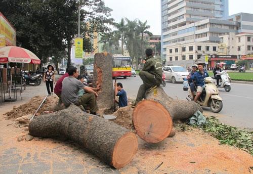 Ông Phan Đăng Long nói về việc chặt cây xanh Hà Nội