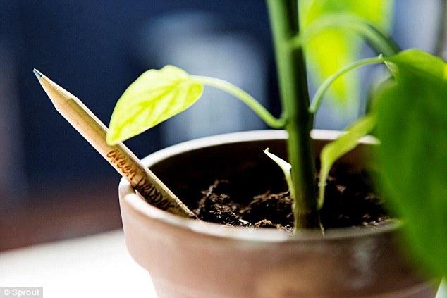 Trồng cây bằng bút chì là phát minh mới ấn tượng và cực hữu ích