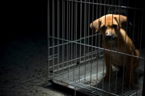 Thử nghiệm này là cơn ác mộng đối với những chú chó con