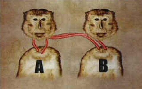 Thí nghiệm ghép đầu khỉ tuy thành công nhưng được cho là một trong những thí nghiệm ghê rợn nhất lên cơ thể động vật