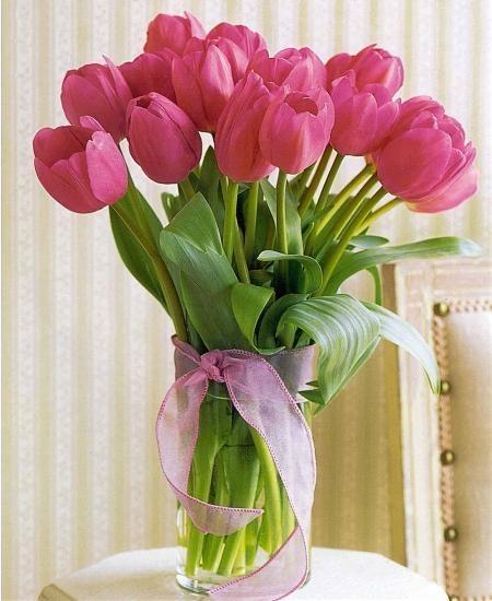 Nếu muốn chọn một món quà tặng ý nghĩa ngày 8/3 cho người đặc biệt thì hoa tulip cũng là một lựa chọn thú vị