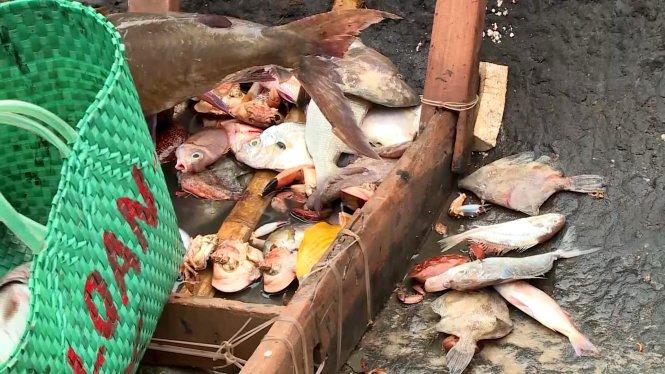số lượng cá chết dạt vào bờ biển Quảng Trị trong thời gian ba tuần qua ước tính hơn 30 tấn.
