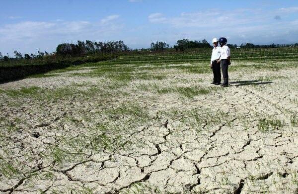 Đại hạn hán ở Quảng Ngãi, mua nước dự trữ, cứu sống cây lúa