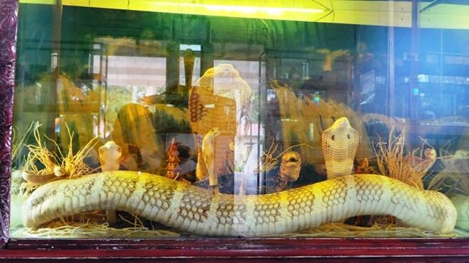 Trường hợp rắn hổ mang chúa lâu đời nhất ở Việt Nam là con rắn ở trại rắn Đồng Tâm với 18 năm