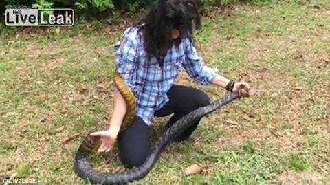 Cô gái trẻ nhanh chóng tóm gọn con vật nguy hiểm. Ảnh: Daily Mail