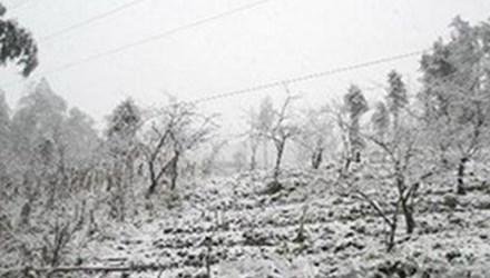 Hai ngày nay, vùng núi cao huyện biên giới Sìn Hồ, Lai Châu phủ trắng băng tuyết, bởi nhiệt độ đang duy trì chỉ từ - 3 đến – 4 độ C. Theo số liệu thống kê chưa đầy đủ của huyện Sìn Hồ, đến thời điểm này rét đậm, rét hại trên địa bàn. Ảnh Dân Trí