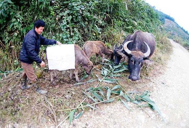 Trong đó, địa phương thiệt hại nặng nhất là Quảng Ninh với hơn 430 con (chủ yếu ở huyện Bình Liêu và thành phố Uông Bí). Ảnh Dân Trí