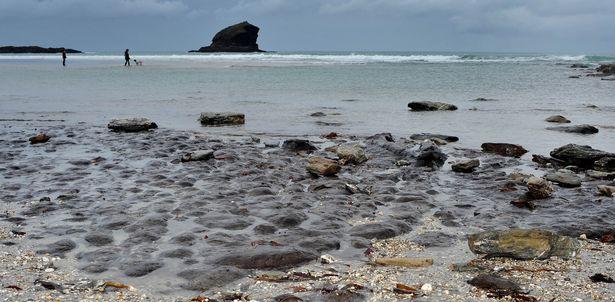 Dấu tích khu rừng cổ đại lộ ra sau một cơn bão tại bờ biển Cornwall, Anh