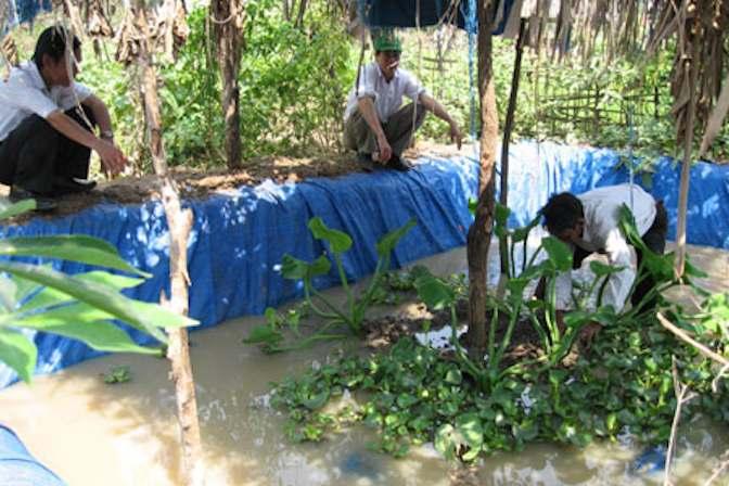 Chuẩn bị bể nuôi lươn sinh sản