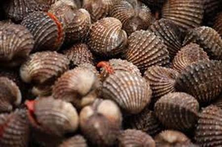 Một trong những loại hải sản có độc là sò huyết do chứa nhiều loại vi khuẩn nguy hiểm