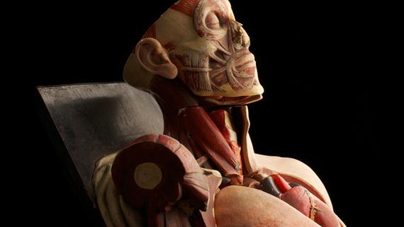 Mô hình giải phẫu có vai trò quan trọng trong ngành y học hiện đại