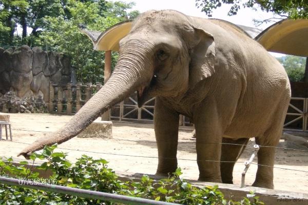 Ghé thăm sở thú ngày cuối tuần cùng bé