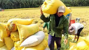 VFA dự kiến sẽ xuất khẩu hết lượng gạo trong dân từ nay tới cuối năm
