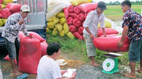 Thị trường lúa gạo thế giới gần như lâm vào khủng hoảng nguồn cung sau những diễn biến bất thường tại các quốc gia xuất khẩu lúa gạo lớn