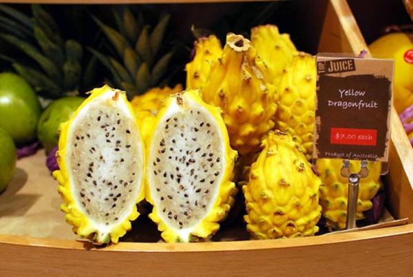 Trên thị trường trái cây độc lạ hiện nay có rất nhiều loại hoa quả lạ mắt, trong đó có thanh long vàng