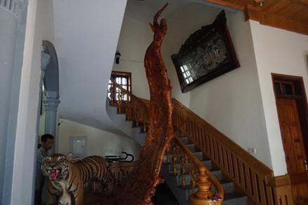 Trong nhà đại gia này còn có một rễ cây gỗ chua hình thù như cánh phượng, cao khoảng hơn 4m. Rễ cây này được ông thuê chạm trổ hình thù chim, thú rất bắt mắt. Phía dưới còn có một tiêu bản con hổ lớn.