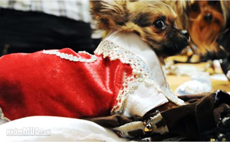 Kinh doanh gì vào mùa đông, tại sao bạn không thử sức với mặt hàng giữ ấm đáng yêu cho thú cưng