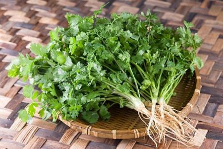 Rau mùi là gia vị, rau sống làm tăng thêm hương vị cho các món ăn và có nhiều tác dụng chữa bệnh tuyệt vời.