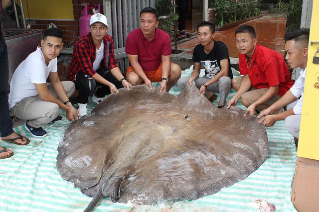 ha-noi-ca-duoi-khung-216-kg-dai-hon-3m-bay-tu-thai-lan-ve-phuc-vu-dai-gia
