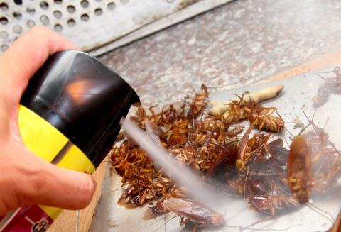 Sử dụng thuốc diệt gián để vệ sinh nhà cửa