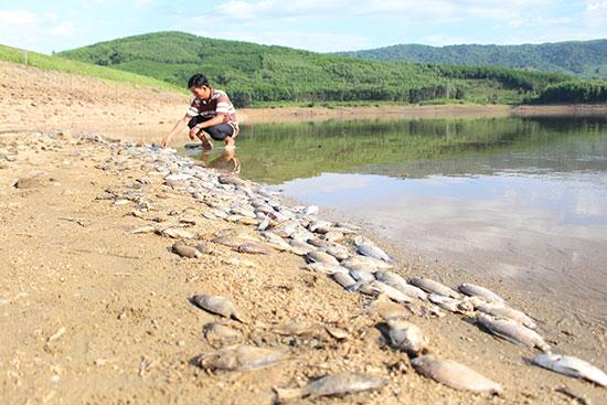 Theo báo Quảng Nam, những ngày này, nhóm hộ nuôi cá thôn Linh Cang như ngồi trên đống lửa, nhẩm tính con số thiệt hại đã lên đến hàng chục triệu đồng. Ảnh: báo Quảng Nam.