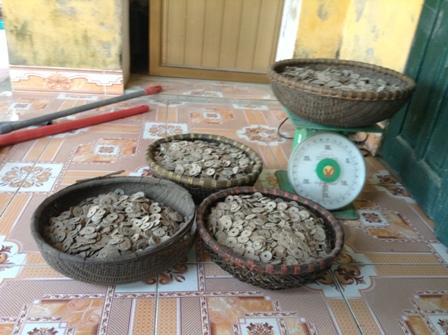 50kg tiền cổ được tìm thấy khi đang làm móng bể chứa nước mưa