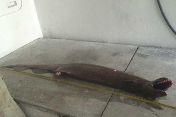 Trước đó, ngư dân Úc cũng bắt được một loài cá có hình thù kỳ quái