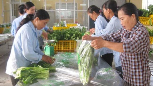 Triển khai chuỗi cung cấp rau, thịt an toàn tại Hà Nội