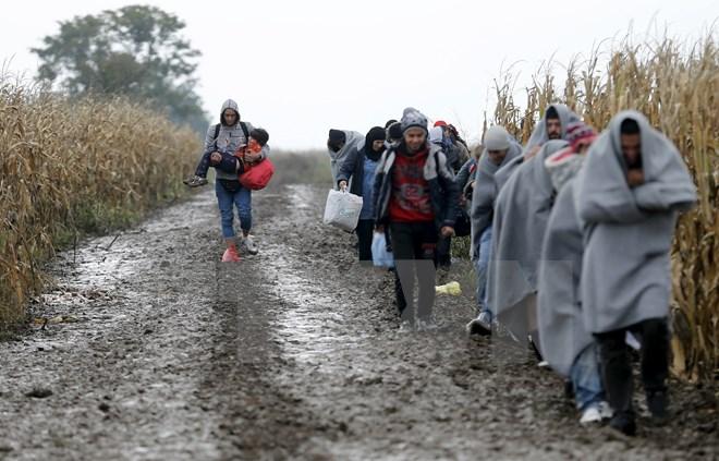 Người di cư vượt biên giới Serbia-Croatia