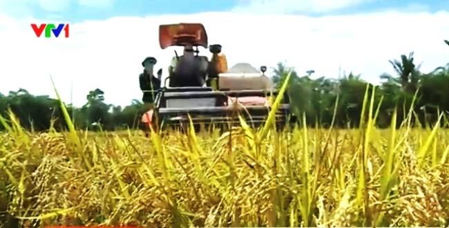 Theo tin tức mới cập nhật trong nước, Việt Nam thắng thầu 450.000 tấn gạo xuất sang Philippines