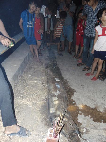 Cá lạ dạt vào bờ biển ở Hà Tĩnh